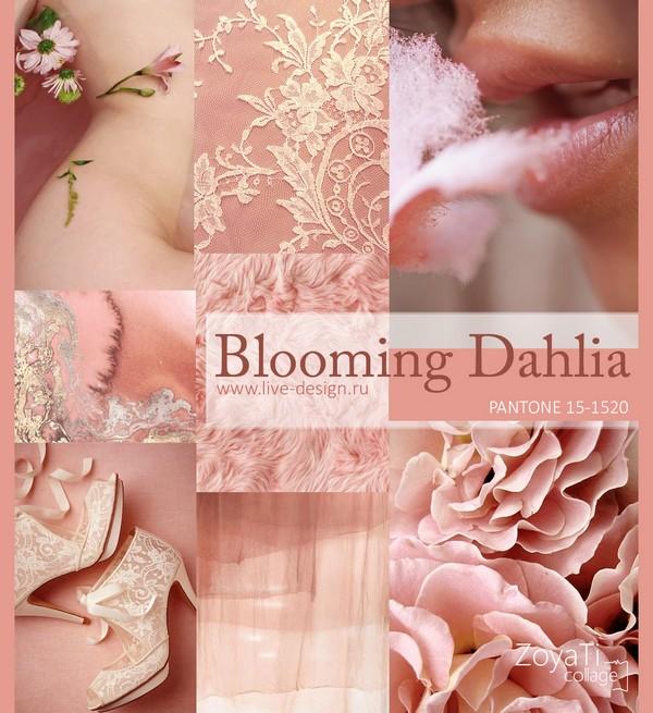 Blooming-Dahlia1.jpg